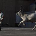 Kojot - Idegen a vadkeleten