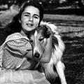 Kutyavilág - 12 film a négylábúakról