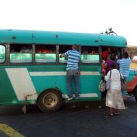 A Volán-buszok élővilága