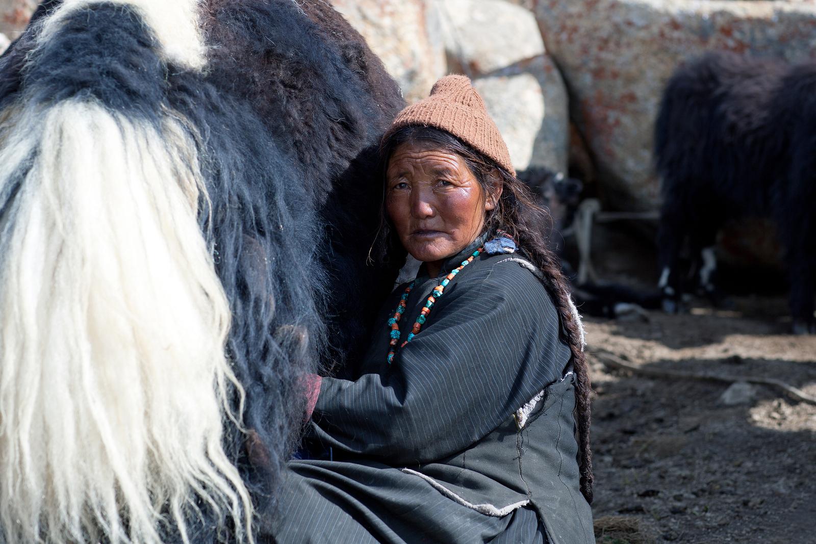 bigstock-tibetan-woman-with-yak-in-lada-148124192.jpg