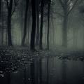Van valami az erdőben