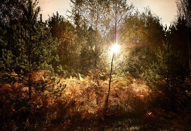 Autumn-1.jpg
