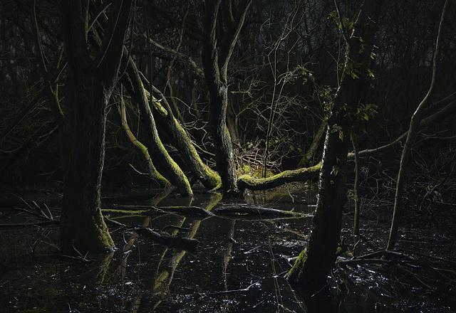 Swamp-7-2008.jpg