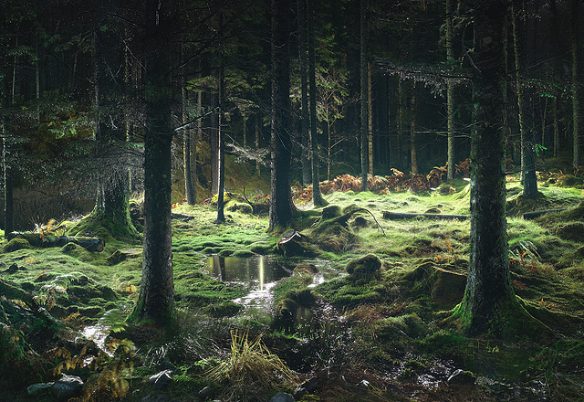 Torridon-Moss-Pond-2005.jpg