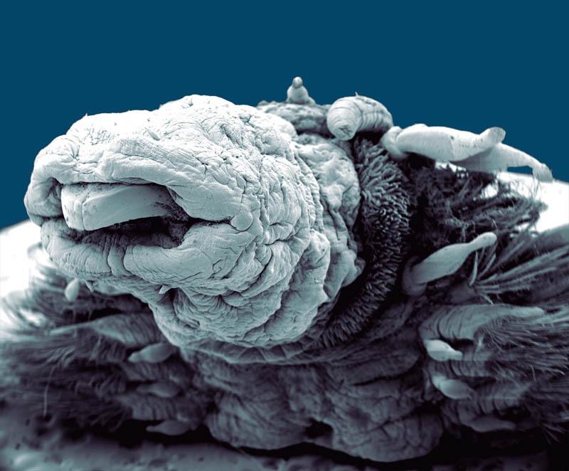 hydrothermal-worm-macro-philippe-craqssous.jpg