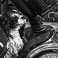 Négylábú aszfaltbetyárok - A város fotózása, 3. rész