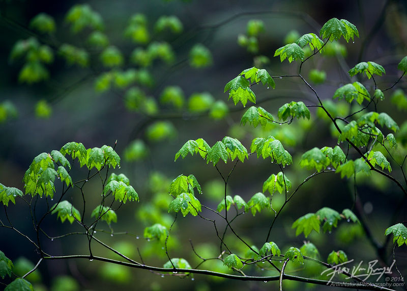 7-tipp-tavaszi-fotokhoz-4.jpg