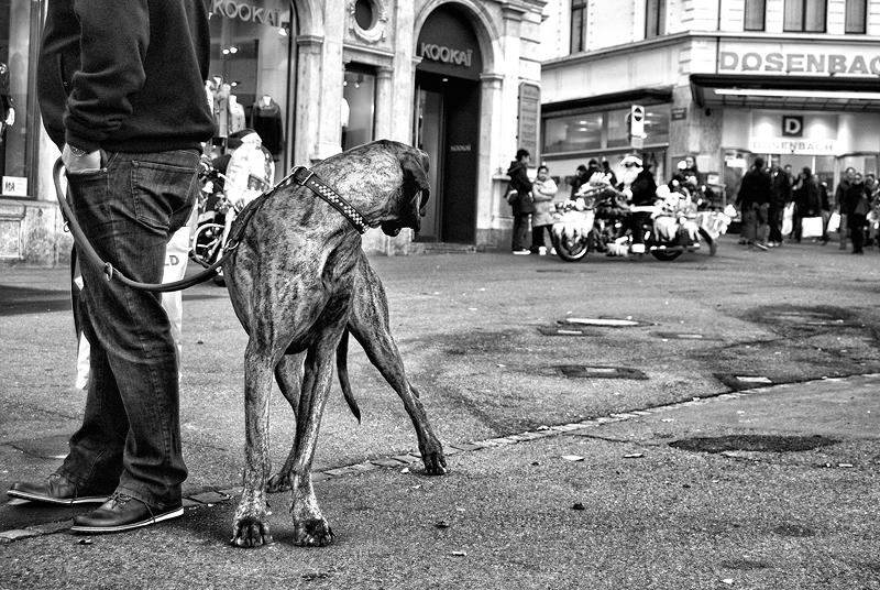 roman-tripler-kutya-8.jpg