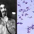 Frank Zappáról neveztek el egy új baktériumtörzset (444)