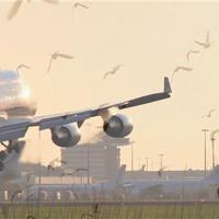 Nyomtatott drónok ügyelhetik amerikai repterek biztonságát