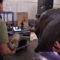 Nyomtatott cápafej kerül egy ausztrál múzeumba