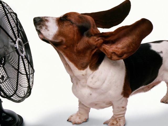 #27 - Nyár ellenszerei - 7 hűsítő a nyári hőségre