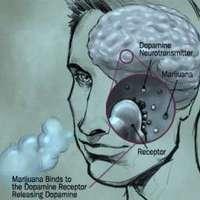 A kannabisz módosítja az agy jutalmazó központját