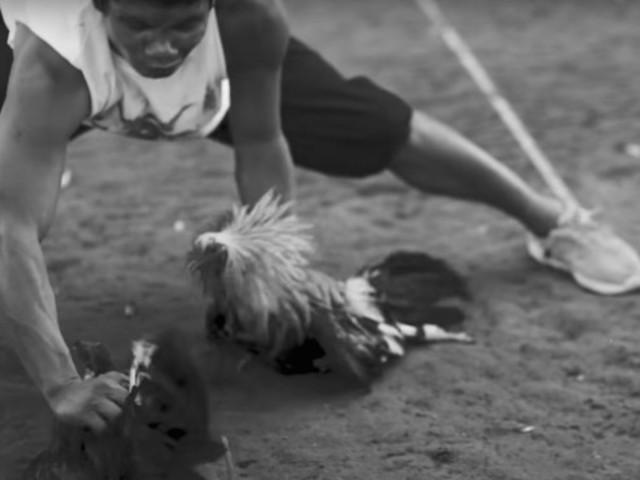 Brutális kakasviadal a Dead Cross új klipjében