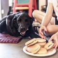 Megható képsorozat egy kutya utolsó napjáról