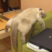 Elfáradtam a sok Facebookozástól...