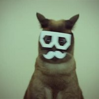 Dubstep cica - videó