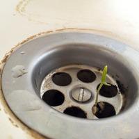 Breaking news - Újabb növény a lefolyóban