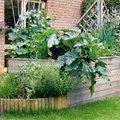 Kertészbarkács: Magaságy