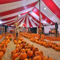 A minőségi Halloween