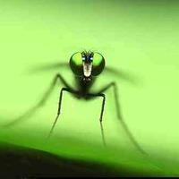 Szúnyogok és hálók