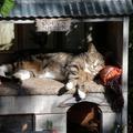 Macskaszállás télire