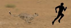 cheetah250.jpg