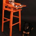 Kutya-etetőszék, ha már nincs mire pénzt költeni