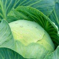 VENDÉGPOSZT! - Zöldség mese