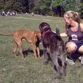 Canicross: futás kutyák után