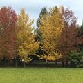 Szépséges ősz