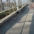 Kókány munka az érdi vasútállomáson