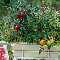 5 tuti tipp konyhakerti növényekhez