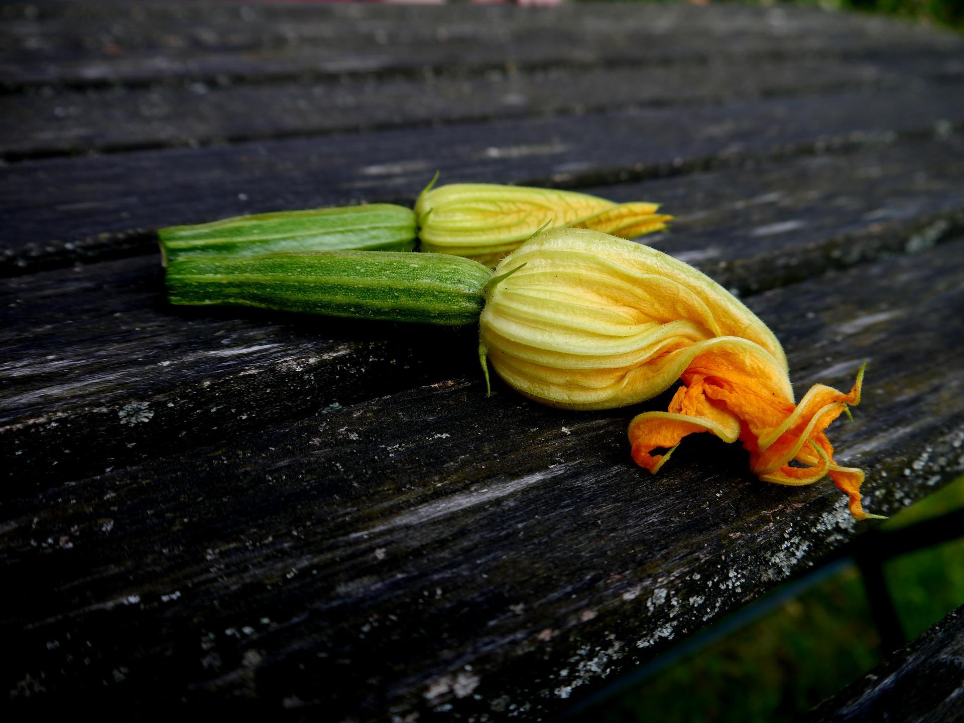 zucchini-395082_1920.jpg