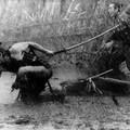 Kurosawa retrospektív: A hét szamuráj