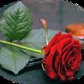 Virágok, Flowers gifs, Blumen, Květiny, Цветы, الزهور , Bloemen, virág gifek 2