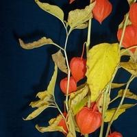 Egon Schiele emléke
