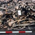 Megtalálták Ragnar fiai hadseregének halottait