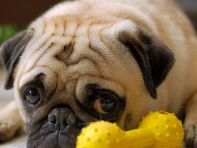 Kitől tanult bocsánatot kérni a kutya?