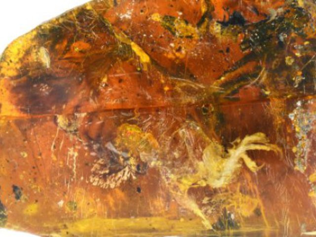 Borostyánba zárt történelem előtti kismadár