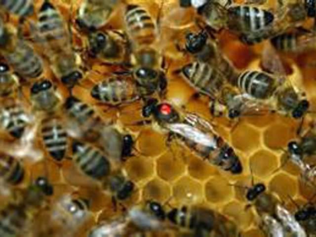 A robotok a méhektől tanulnak