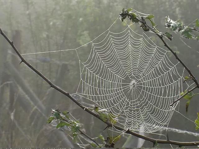 Még erősebb pókhálót!