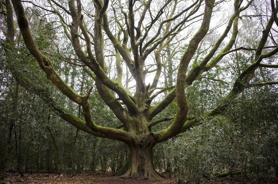 A fák titkos életéről írt könyvet egy német erdész