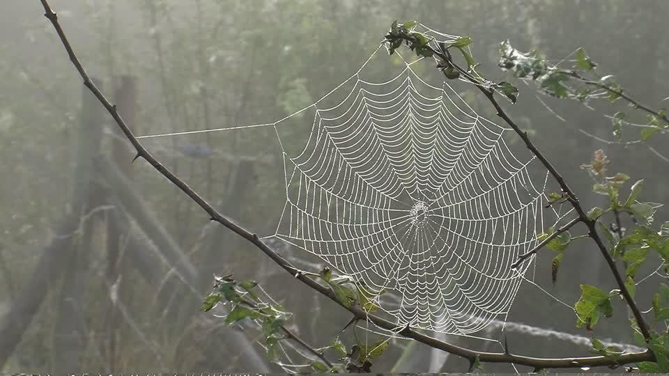 549472659-spider-web-limb-part-of-tree-haze-fog-weather.jpg