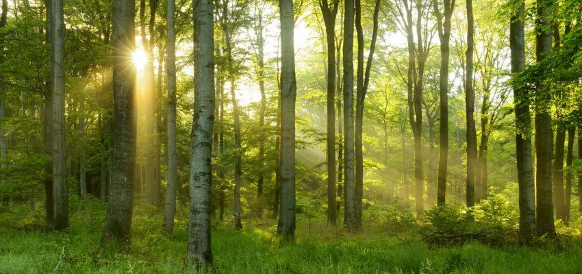 forest-850x400.jpg
