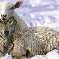 Próféták és a közélet