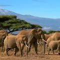 Elefánttemető
