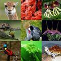 CITES vagy nem CITES – ez itt a kérdés