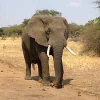 Hogyan csináljunk bolhából elefántot