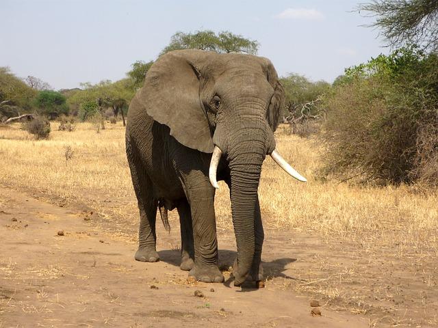 elephant-114543_640.jpg